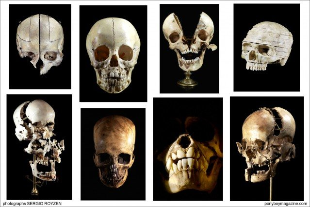 Collage of skull images by photographer Sergio Royzen, from the collection of Ryan Matthew Cohn from Oddities for Ponyboy Magazine.