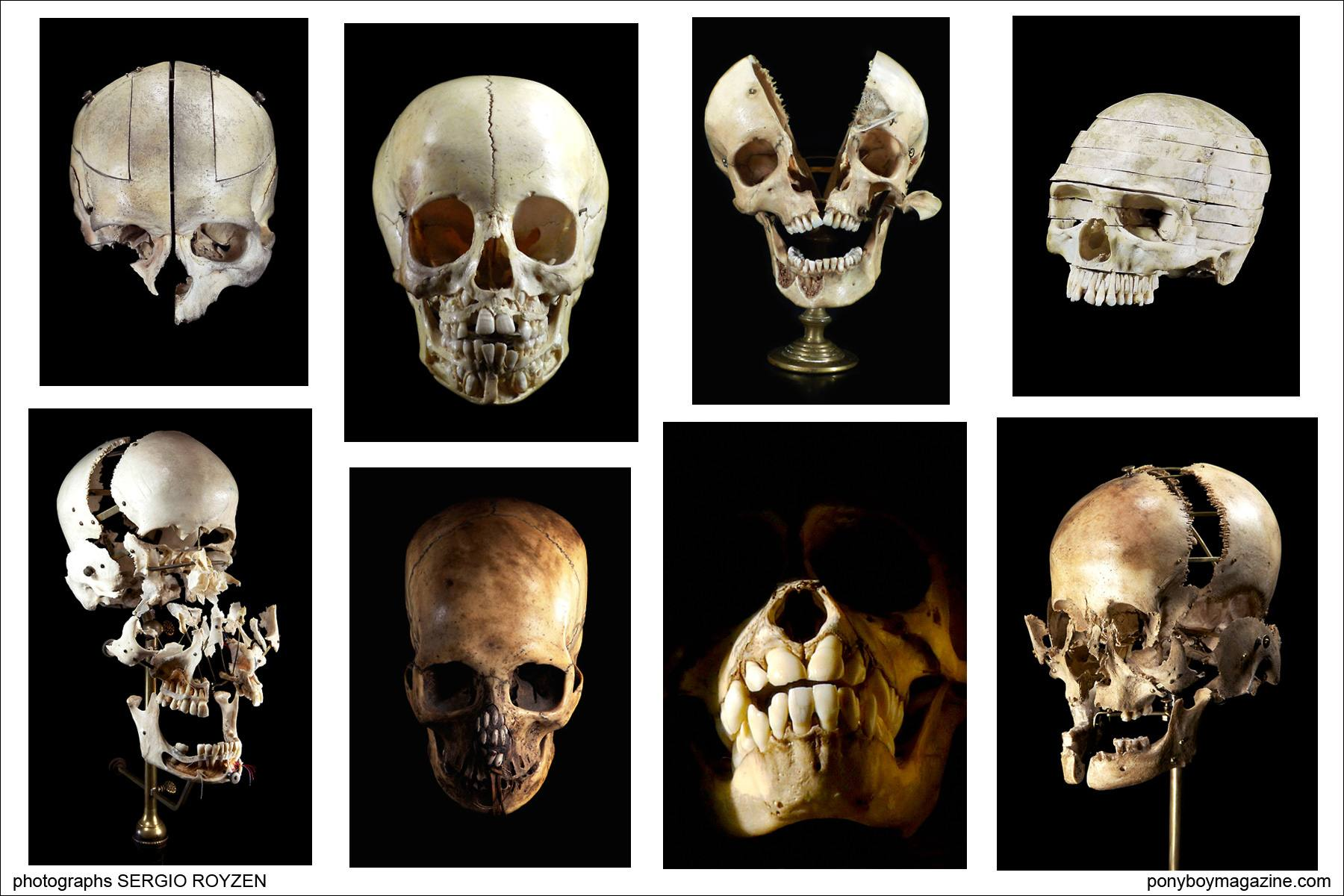 Ryan Matthew Cohn's extensive collection of skulls photographed by Sergio Royzen.