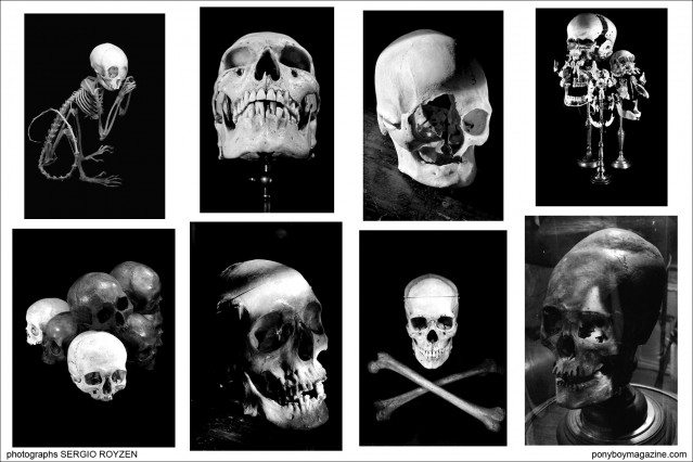 B&W skull images by Sergio Royzen, from the collection of Oddities star Ryan Matthew Cohn for Ponyboy Magazine.