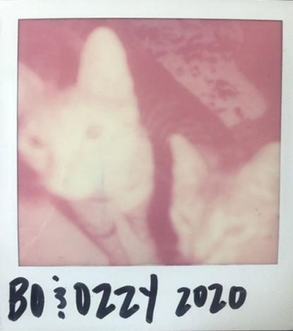 Polaroid of Syd Suuux's cats. Ponyboy magazine.